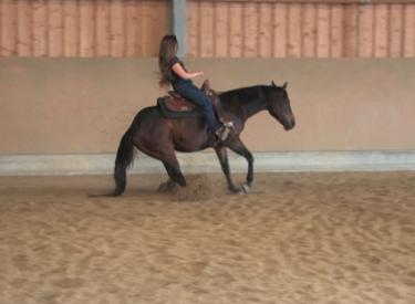 brücke pferd ausreiten